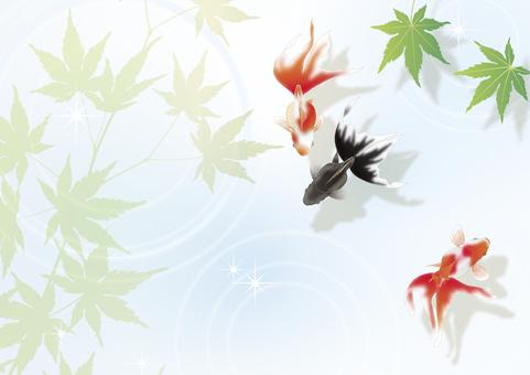 金鱼和蓝色的叶子__横向大小