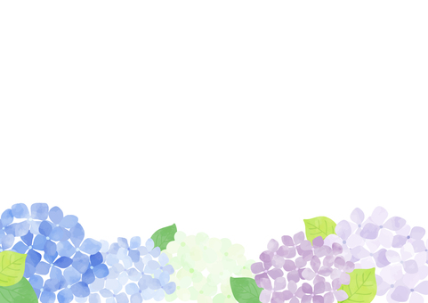 Hydrangea background 2