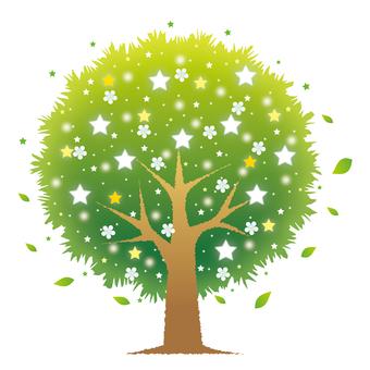 星の花咲く木