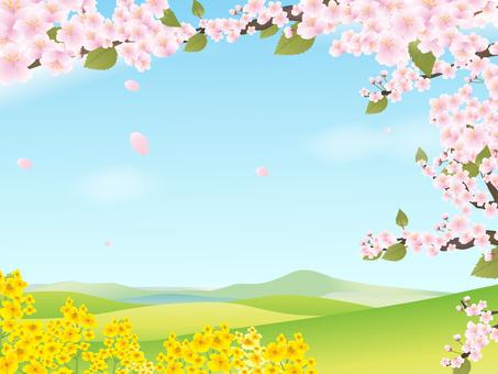 벚꽃 20
