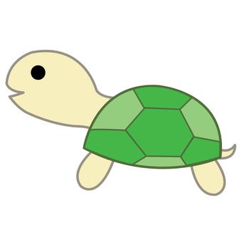 Animal illustration-turtle