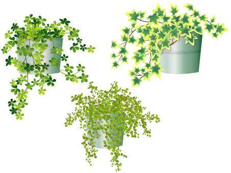Houseplant set tin