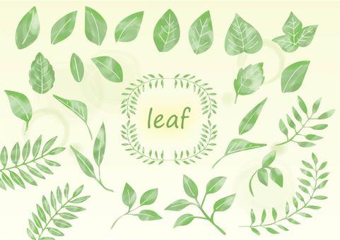 수채화 잎 소재