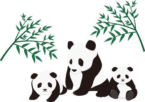 팬더 대나무