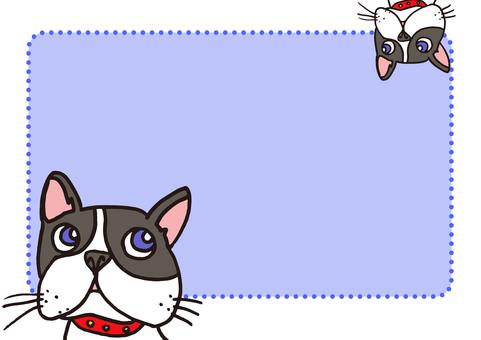 dog_ French Bulldog 11