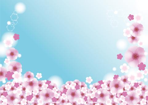 분홍색 벚꽃 만개의 배경