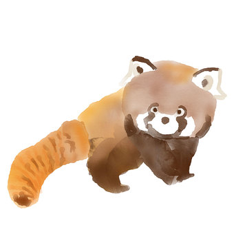 Watercolor Lesser Panda