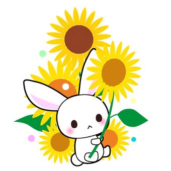 Rabbit and sunflower illustrations cut