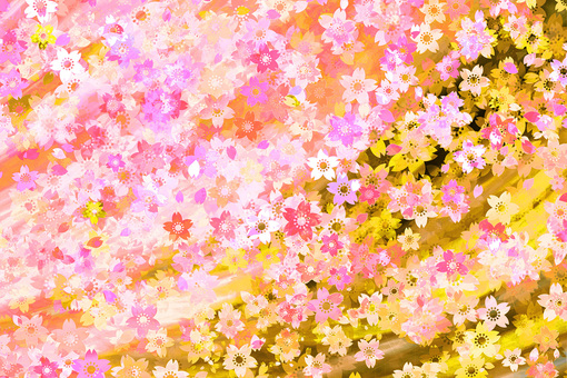 Cherry blossoms in full bloom Texture gradation background