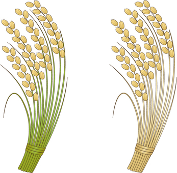 2 rice panels