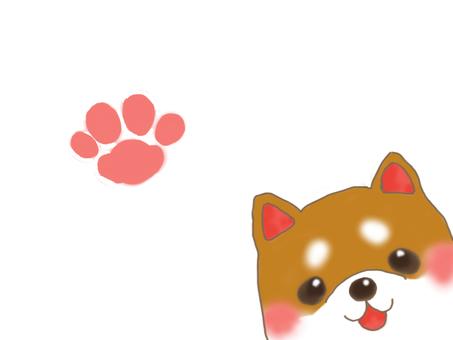 Shiba Inu 2