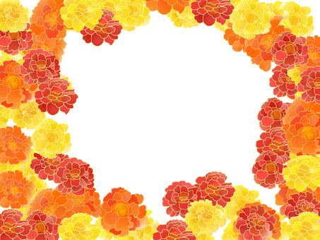 萬壽菊框架