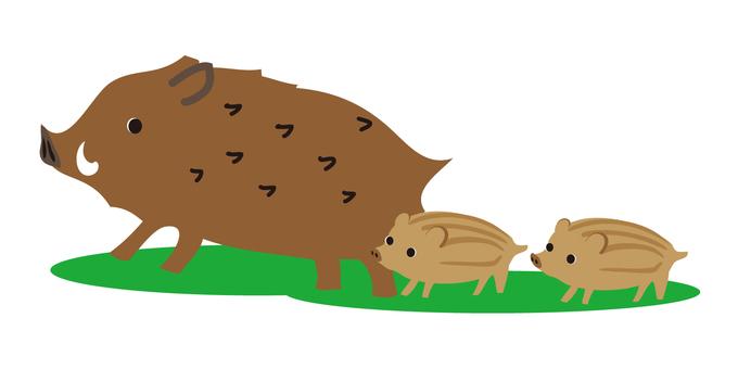 Wild animal wild boar