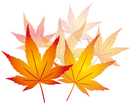 Maple icon Illustration material Transparent feeling Decorative decoration