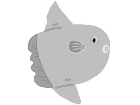 Sea friends sunfish