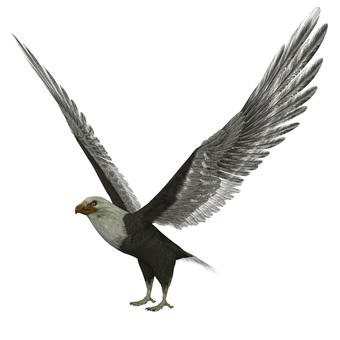 Eagle 01