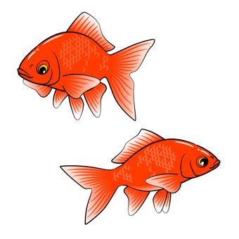 Goldfish -001