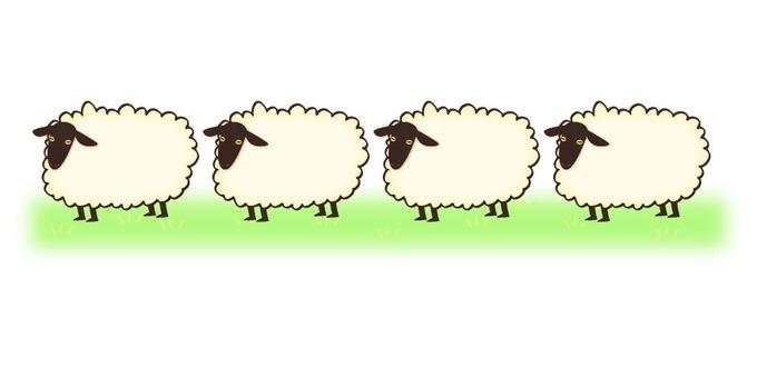 A row of sheep