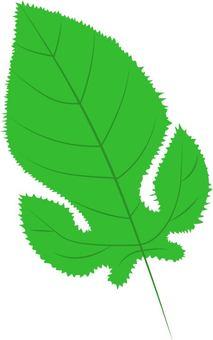 Mulberry leaf 1