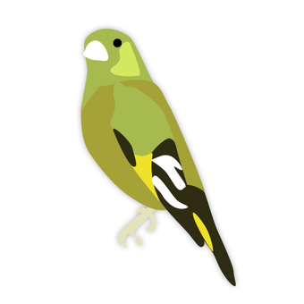 Kawarahiwa (familiar bird)