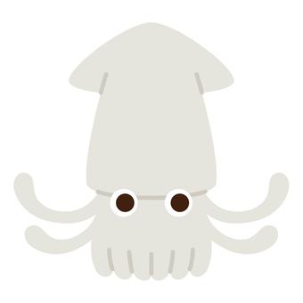 바다 생물 - 오징어