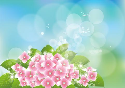 Aozora & hydrangea 1