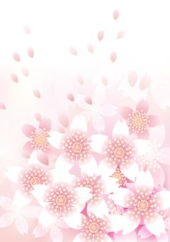 Sakura's flower 90