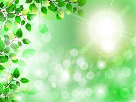 日光新鮮綠色