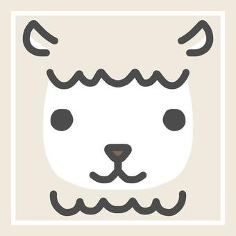 알파카 alpaca