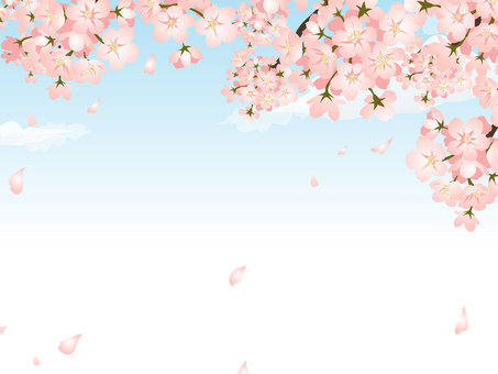 Cherry blossoms and blue sky frame