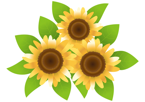 Sunflower 78