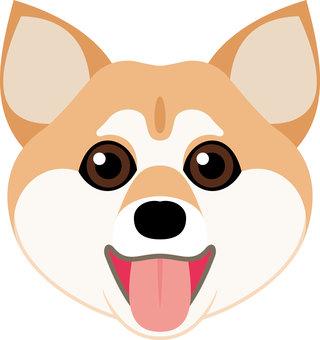 Canine breed Shiba dog