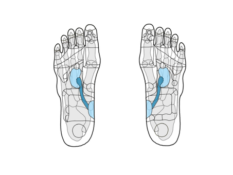 Reflective area of ​​foot - excretion area (with bone)