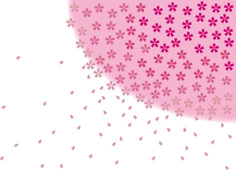 Cherry blossom _ gradation