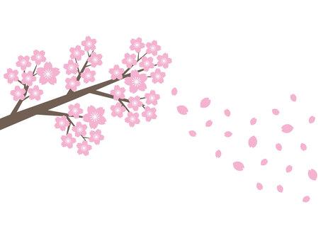 벚꽃과 벚꽃 눈보라