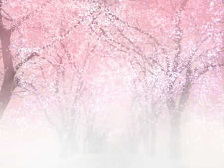 벚꽃길 안개