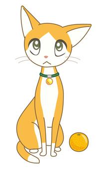 Eight broken orange cat