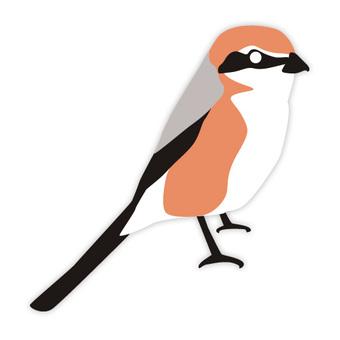 Mos (familiar bird)