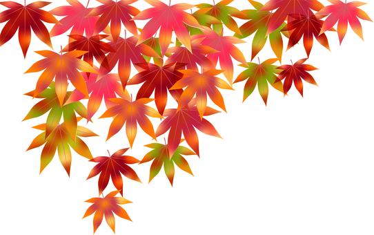 Autumn leaves 40