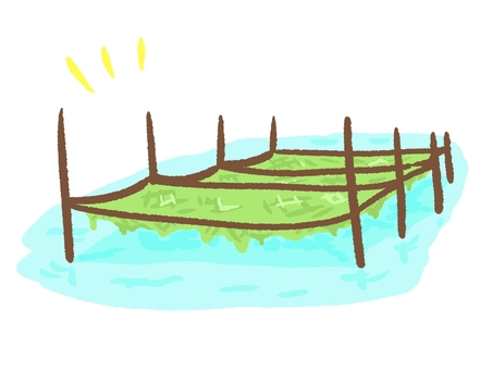 Seaweed culture
