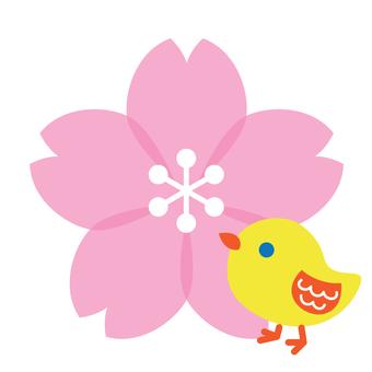 櫻花和小雞