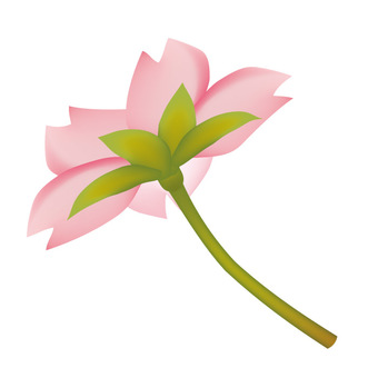 Spring · Sakura · Sakura 06