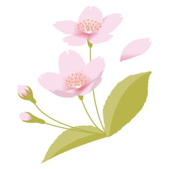 벚꽃의 포인트