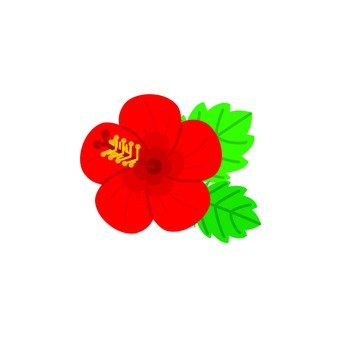 Hibiscus (red)