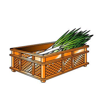 A long onion