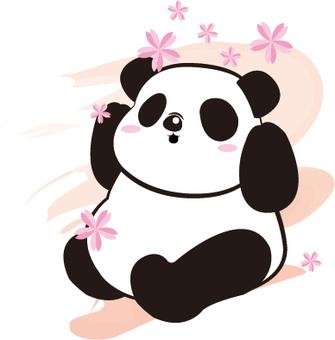 Sakura Panda