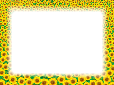 Wide frame (01) Sunflower field