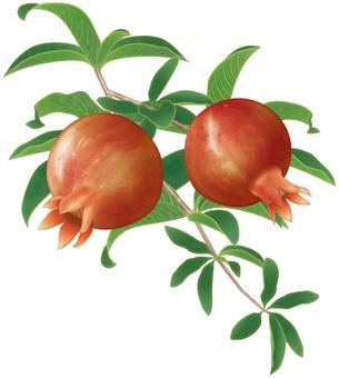 Pomegranate / Part 1