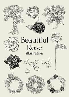 Beautiful rose illustration