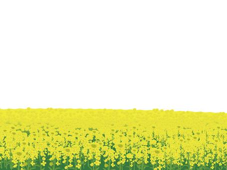 Rape flower's landscape Landscape 07